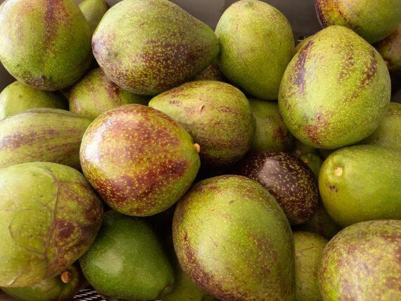 Avocats Martinique - Frecinette