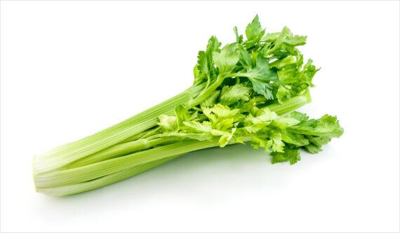 Celeri - Frecinette