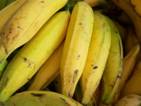Bananes jaunes - Frecinette
