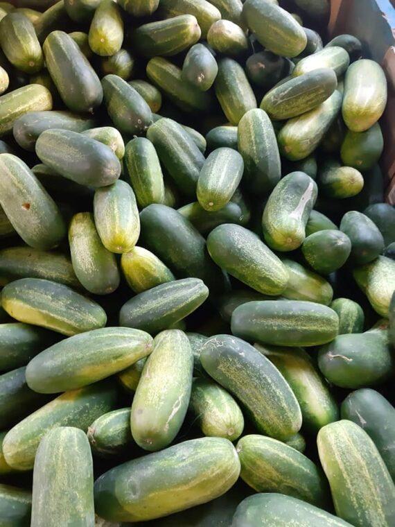 Concombres locaux - Frecinette