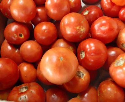 Tomates locales - Frecinette